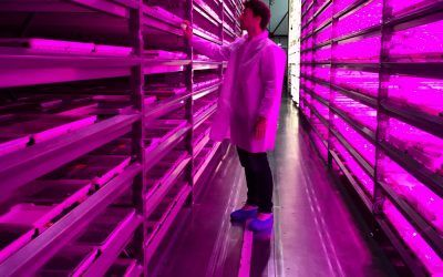 The Next 5 Years Will See the Vertical Farming Market Soar