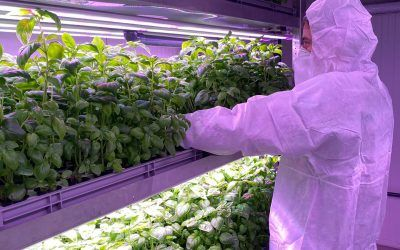 Indoor Vertical Farming in a Post-COVID World
