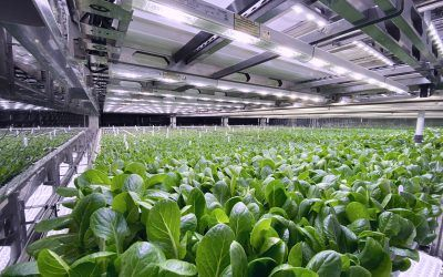 Urban Health Farms Receives €2 Million Investment from Capiva Plus Fund